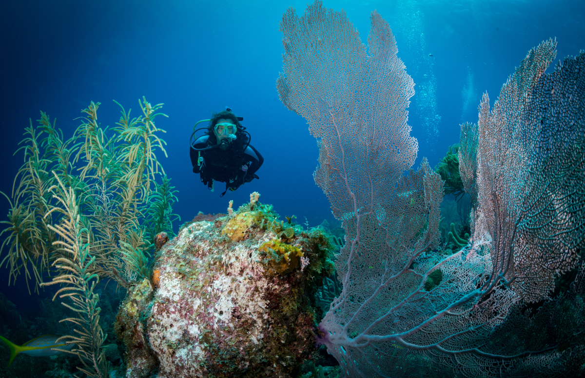 Female diver and gorgonian fan in Bonaire, the Caribbean