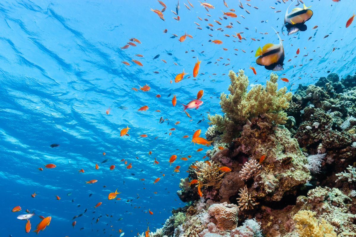 Colourful fish swimming around a shallow coral reef