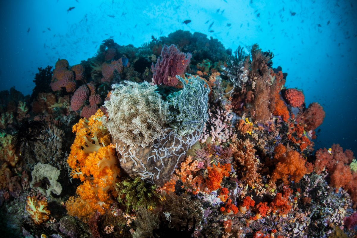 Coral reef with crinoids and soft corals