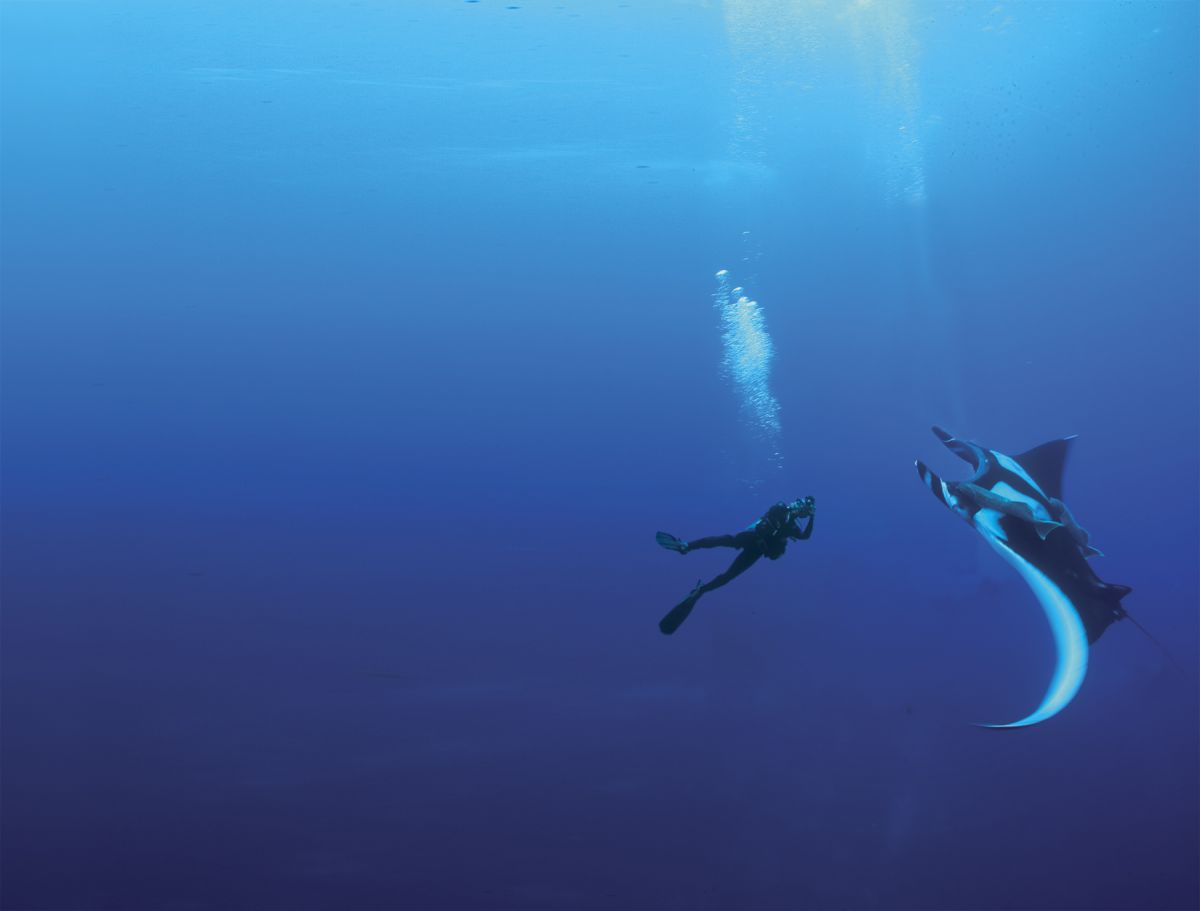 Diver and manta ray in Socorro