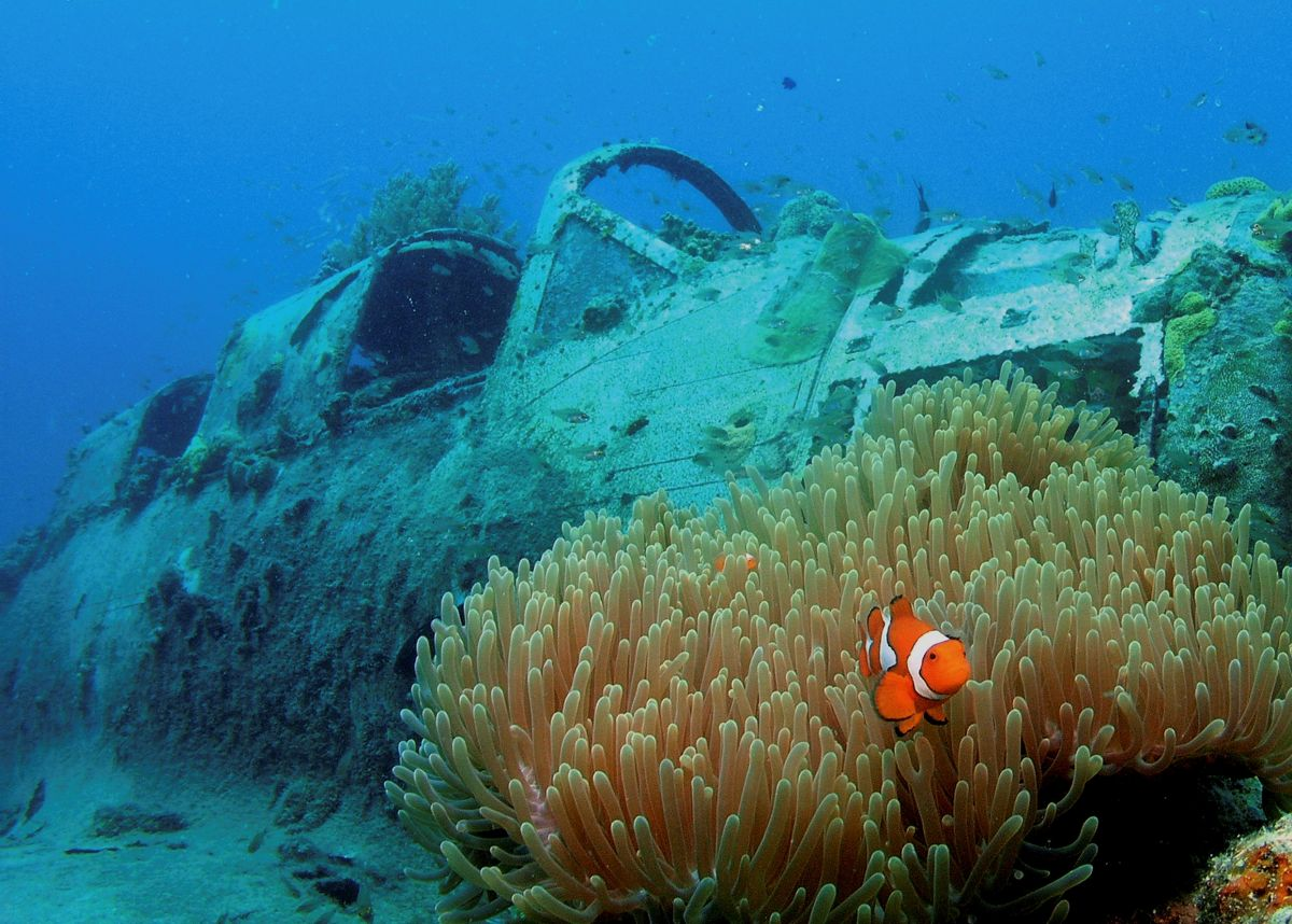 Wreck and anemone in Papua New Guinea