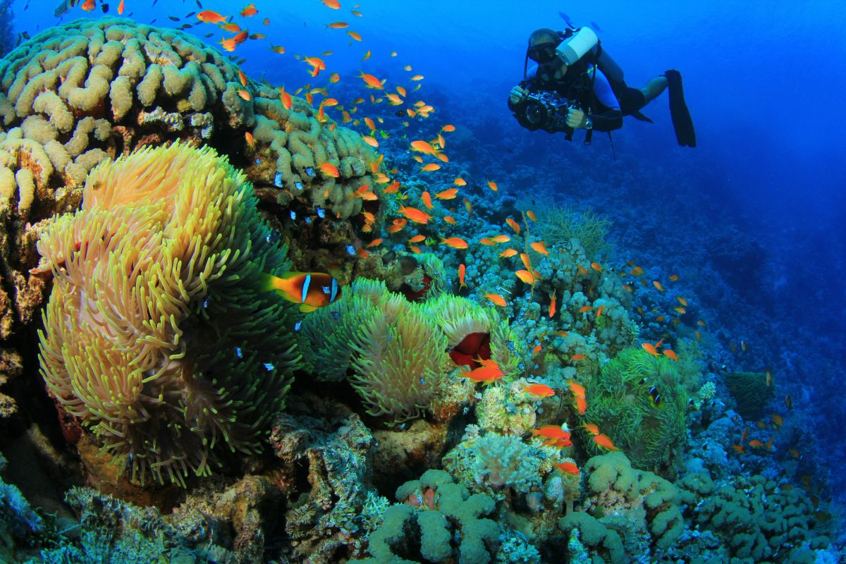 Underwater photographer diving in Sharm el Sheikh