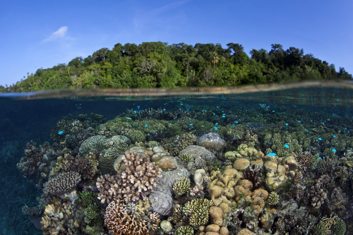 Topside and coral reef in the Solomon Islands