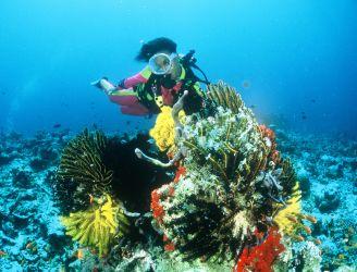 Maldives Tourist Board