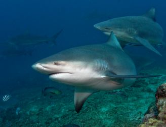 Sharks Galore in South Africa & Mozambique