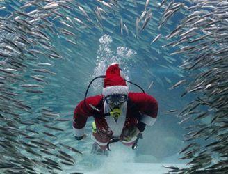 Regaldive Christmas & New Year Opening Hours - Photoshot