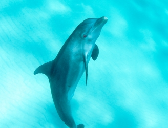 Dolphin image courtesy of Malcolm Nobbs