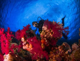 Reasons to dive the Red Sea
