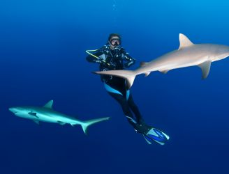 A Sensational Shark Season in the Red Sea