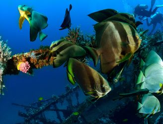 Alma Jane wreck in the Philippines