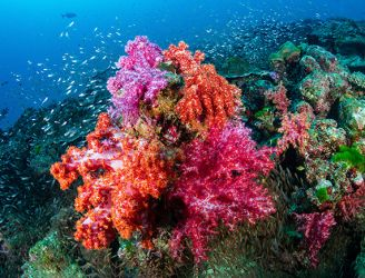 Coral reef in the Similan Islands, Thailand