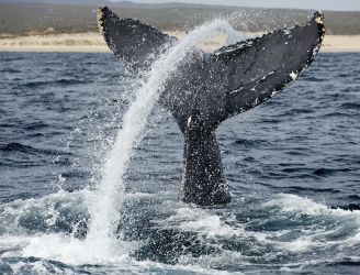 Socorro Islands Liveaboards - © Photoshot