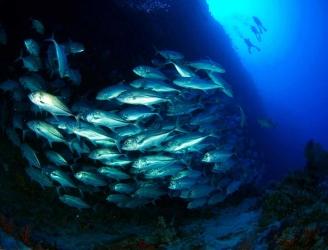 layang layang diving