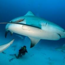 School for Sharks