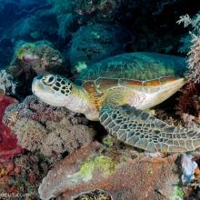 Image credit: Shaun Tierney, seafocus.com