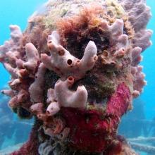 Underwater Sculpture Park, Grenada