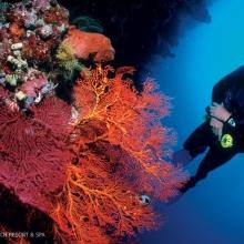 Diving at the Matahari Beach & Spa, Bali