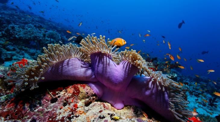 Maldives U Kefrig Werner Lau