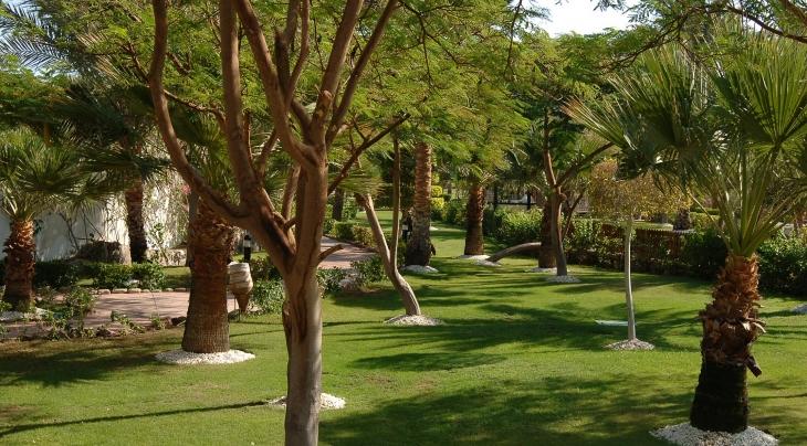 Hilton Sharm El Sheikh Fayrouz Resort Gardens