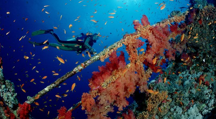 Red Sea Diving College Latest Diver Deals & Special Offers