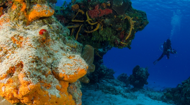 Diving in Cozumel | Diving Holidays | Regaldive - The Diving