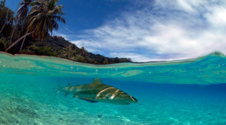 French Polynesian Liveaboards Trips   Diving Holidays